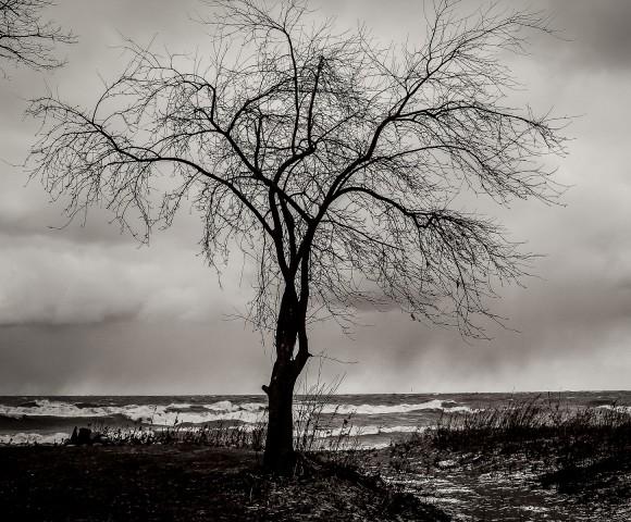 Tree on a Beach