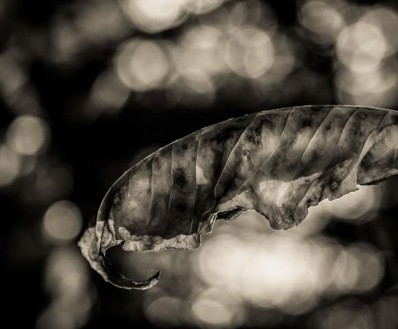 Leaf in Air