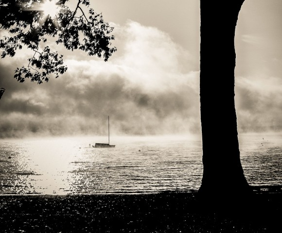 Tree and Solitary Boat